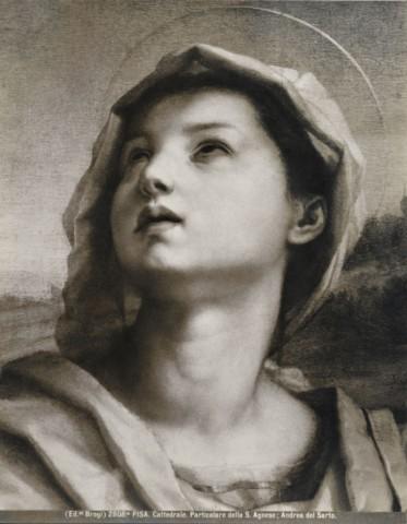 Particolare della Santa Agnese; Andrea del Sarto. - 85443